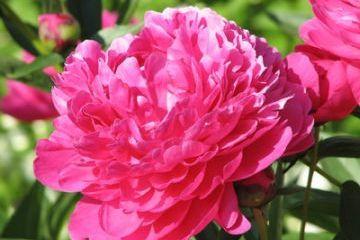 Vitorlázás a Pünkösdi rózsa minden irányába